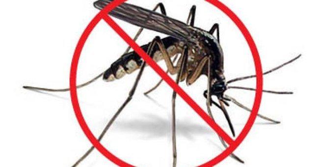 Virus West Nile là do muỗi vằn gây ra